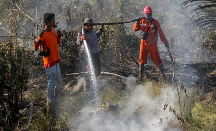 Lahan Gambut di Pinggiran Kota Pekanbaru Terbakar, Pemadaman Masih Berlangsung