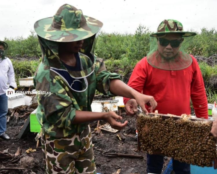 Zukri: Budidaya Madu Lebah Akasia Dapat Tingkatkan Ekonomi Masyarakat