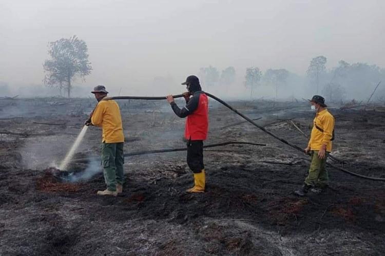 Satgas Karhutla Sedang Berjibaku Padamkan Api Kebakaran Lahan di Rohil