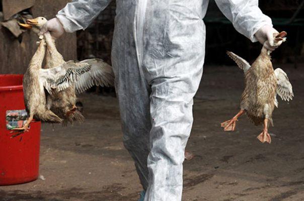 Covid-19 Belum Usai, China Harus Siaga Flu Burung