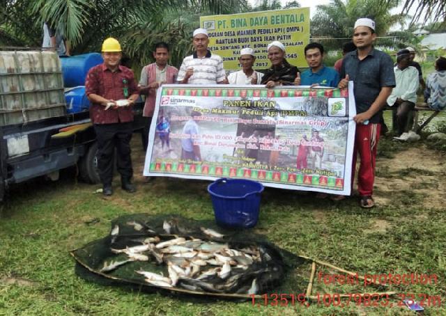 PT Bina Daya Bentala Bersama Kelompok Tuah Kampong Panen Ikan Patin Program DMPA