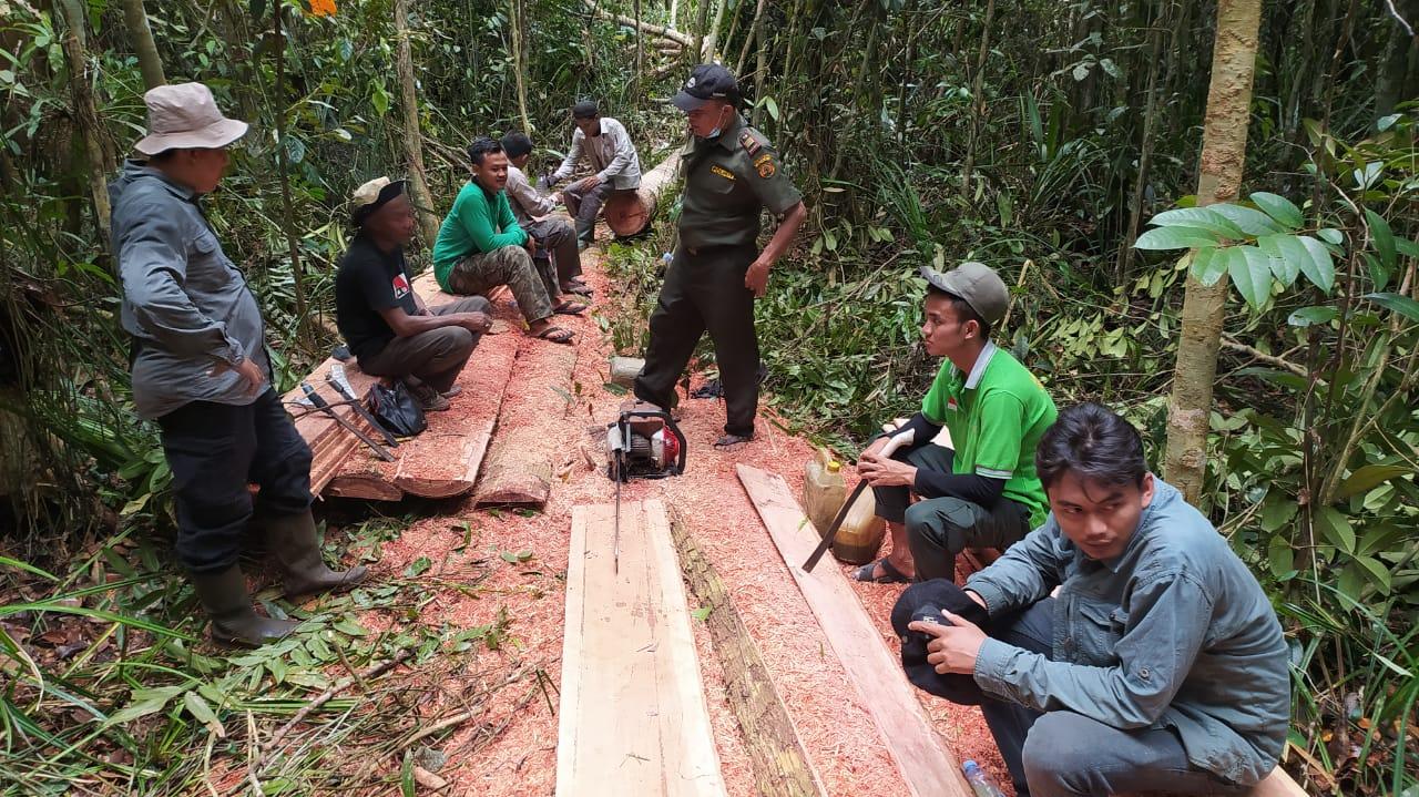Aktivitas Pembalakkan di Konservasi SM Kerumutan, BBKSDA Riau Sita 4 Kubik Kayu