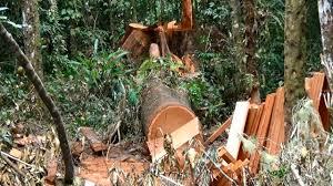 Kasus Perambahan Hutan, Martua Sinaga Dituntut 4 Tahun Lebih, Begini Kata Penasehat Hukum