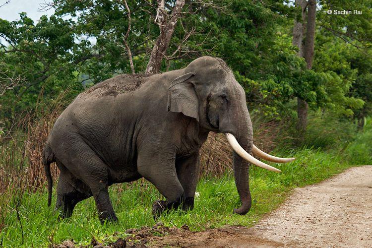 WNI Tewas Terinjak Gajah di Dekat Perkebunan Malaysia