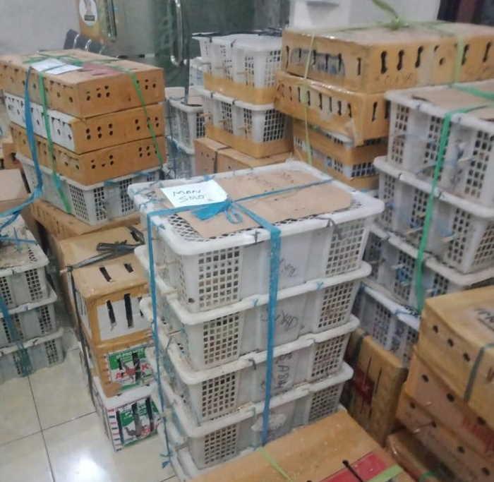 Mobil Rumah Makan Minang Bawa Ribuan Burung Diamankan di Denpasar